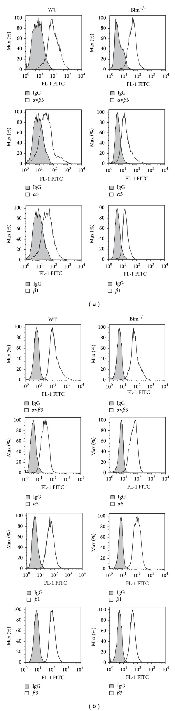 Wild-type and Bim −/− retinal vascular cells had similar integrin expression. Expression of various integrins was determined in wild-type and Bim −/− endothelial cells (panel (a)) and pericytes (panel (b)) using FACScan analysis as described in Section 5 . The shaded graphs show staining in the presence of control IgG. These experiments were repeated twice with similar results.