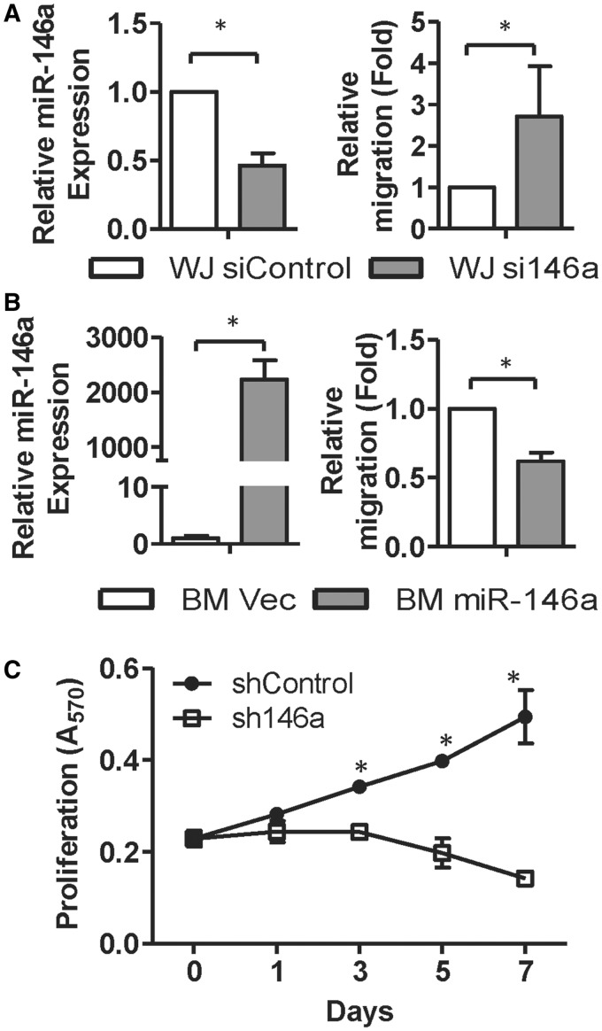 miR-146a-5p regulates MSC migration and proliferation. ( A and B ) miR-146a-5p suppresses MSC motility. WJ-MSCs transfected with siRNAs against GFP or miR-146a-5p (siControl or si146a; A), and BM-MSCs transduced with lentiviruses expressing miR-146a-5p or empty lentivirus vector control (B) were used in Transwell assays. miR-146a-5p levels were detected by RT-qPCR (left panels). Results are shown as mean ± SD from four experiments. * P