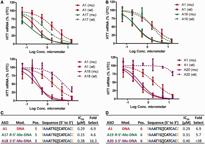 Effect of R -5′-Me-DNA and S -5′-Me-DNA on allele selectivity is dependent on position of incorporation and on the absolute configuration of the 5′-methyl group. Dose-dependent reduction of mu HTT and wt HTT mRNA in human GM04022 fibroblasts for ( A ) ASOs A17 ( R -5′-Me-DNA at position 5) and A18 ( S -5′-Me-DNA at position 5) and ( B ) ASOs A19 ( R -5′-Me-DNA at position 6) and A20 ( S -5′-Me-DNA at position 6). Summary of sequence, activity and selectivity for ( C ) ASOs A1 , A17 and A18 ( D ) ASOs A1 , A19 and A20 . Underlined nucleotide indicates position across from the SNP site. Error bars are in ±SD.
