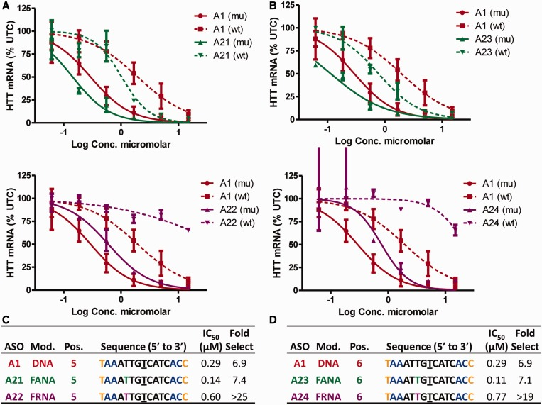 Effect of FANA and FRNA on allele selectivity is dependent on position of incorporation and on the absolute configuration of the 2′-fluorine atom. Dose-dependent reduction of mu HTT and wt HTT mRNA in human GM04022 fibroblasts for ( A ) ASOs A21 (FANA at position 5) and A22 (FRNA at position 5) and ( B ) ASOs A23 (FANA at position 6) and A24 (FRNA at position 6). Summary of sequence, activity and selectivity for ( C ) ASOs A1 , A21 and A22 ( D ) ASOs A1 , A23 and A24 . Underlined nucleotide indicates position across from the SNP site. Error bars are in ±SD.