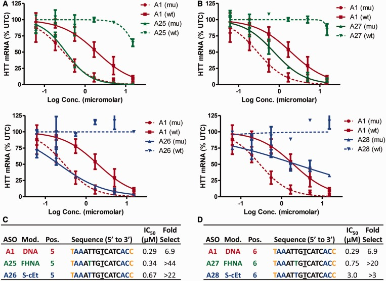 FHNA and S -cEt improve allele selectivity when incorporated at positions 5 and 6 of ASO A1 . Dose-dependent reduction of mu HTT and wt HTT mRNA in human GM04022 fibroblasts for ( A ) ASO A25 (FHNA at position 6) and A26 (S-cEt at position 5) ( B ) ASO A27 (FHNA at position 6) and A28 ( S -cEt at position 6). Summary of sequence, activity and selectivity for ASOs ( C ) A1 , A25 , A26 and ( D ) A27 and A28 . Underlined nucleotide indicates position across from the SNP site. Error bars are in ±SD.