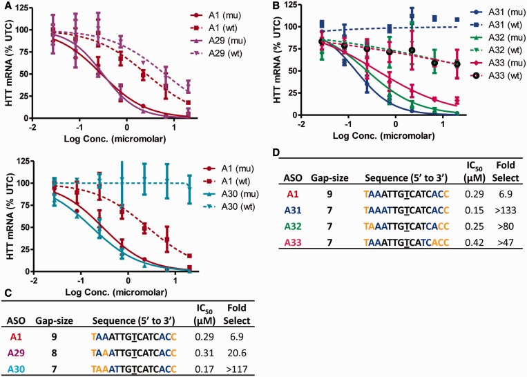Precise sequence of the PS DNA gap region is important for optimal allele selectivity. Dose-dependent reduction of mu HTT and wt HTT mRNA in human GM04022 fibroblasts for ( A ) ASOs A29 (8-base PS DNA gap) and A30 (seven-base PS DNA gap) (b) ASOs A31 , A32 and A33 (seven-base PS DNA gaps frame-shifted by one nucleotide). Summary of sequence, activity and selectivity for ( C ) ASOs A1 , A29 , A30 and ( D ) A31 , A32 and A33 . Underlined nucleotide indicates position across from the SNP site. Error bars are in ±SD.