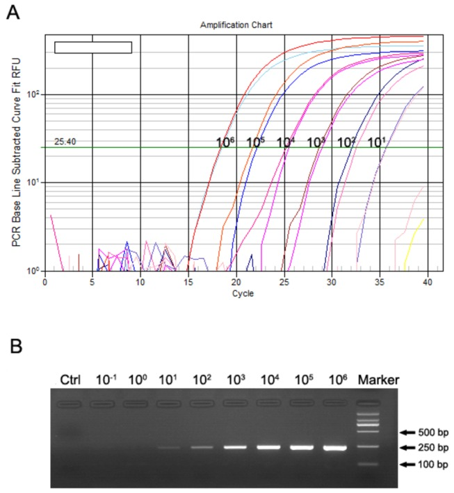 Sensitivity of the SYBR Green Ⅰ-based one-step qRT-PCR assay. ( A ) Serial dilutions of the HTNV cRNA standards ranging from 1×10 6 to 1×10 -1 copies/µl were amplified using the SYBR Green Ⅰ-based one-step qRT-PCR assay in duplicate, and the minimum detection limit of the qRT-PCR assay was 10 copies/µl. ( B ) The qRT-PCR products were electrophoresed on a 2% agarose gel. Marker: DNA ladder of DL2000.
