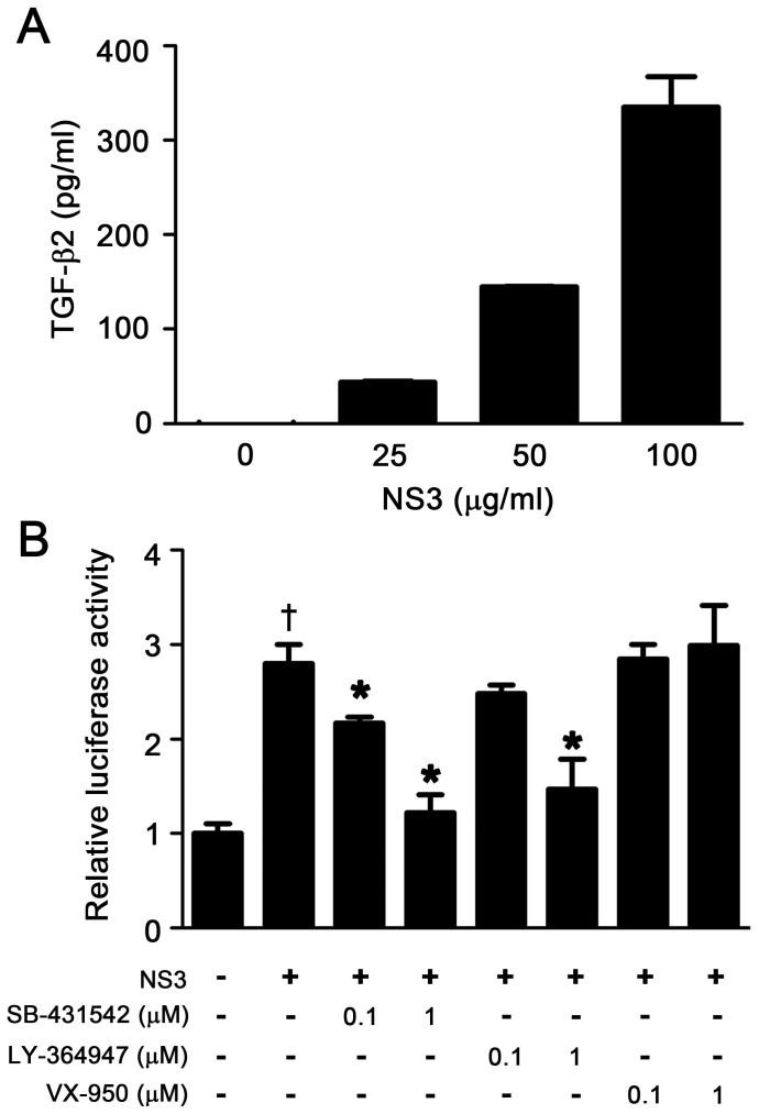 HCV NS3 protease exerted TGF-β mimetic activity via the type I receptor. (A) TGF-β2 antigenicity of NS3. The indicated concentrations of recombinant NS3 protease were used in the TGF-β2 ELISA assays. (B) TGF-β mimetic activity of NS3 and its suppression by TβRI kinase inhibitors. (CAGA) 9 -Luc CCL64 cells were stimulated with 100 μg/ml of recombinant NS3 protease for 24 hours, with or without the indicated concentration of TβRI kinase inhibitor or the NS3 protease inhibitor VX-950 (telaprevir). After 24 hours, the cells were harvested and luciferase activity measured. † p