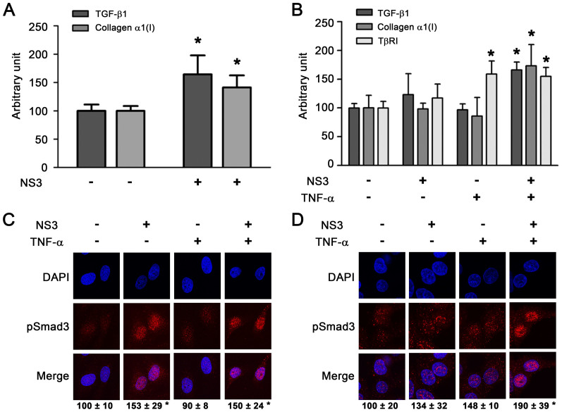 Cooperativity between NS3 and TNF-α in the stimulation of TGF-β1, collagen α1(I), and <t>TβRI</t> expression. (A) Effect on TGF-β1 and collagen α1(I) mRNA expression in LX-2 cells. The cells were stimulated with 50 μg/ml of NS3 for 12 hours. Total cellular RNA was isolated and reverse transcribed to cDNA, and real-time PCR was performed as described in the Methods section. * p