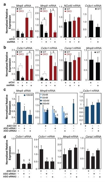 Reduction of eRNA expression results in reduced expression of nearby mRNAs a , Q-PCR analysis of Mmp9 eRNA, and Mmp9 , NCoA5 and Cx3cr1 mRNAs for wildtype and Rev-Erb DKO thioglycollate-elicited macrophages transfected with Ctrl or Mmp9 eRNA <t>siRNA</t> (N WT = 4, and N DKO = 4). b , Q-PCR analysis of Cx3cr1 eRNA, and Cx3cr1, Csrnp1 and Mmp9 mRNAs for wildtype and Rev-Erb DKO bone marrow-derived macrophages transfected with siRNA targeting Cx3cr1 eRNA (N WT = 6, and N DKO = 5). c , Q-PCR analysis of Mmp9 eRNA and Mmp9 and Cx3cr1 mRNAs in thioglycollate-elicited macrophages transfected with the indicated antisense <t>oligonucleotides</t> (ASO, n = 3-7 per condition). d , Q-PCR analysis of Cx3cr1 eRNA and Cx3cr1, Mmp9 and Csrnpl mRNAs in BMDMs transfected with the indicated antisense oligonucleotides (ASO, n = 3-7 per condition). Data in a-d represent mean + s.d., with expression normalized to 36B4 in all cases. For a-b, statistical significance was determined by two tails Student's t-test; for c-d, one-way ANOVA with Tukey HSD test. P value, * P