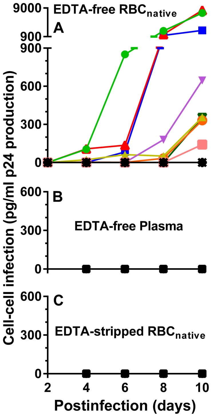 Cell-cell infection of PBMC by RBC native from HIV-positive patients. A . EDTA-free RBC native from 11 chronically-infected patients were obtained as in Fig. 1D and co-incubated with PBMC to examine infection of the PBMC. 25 µl of EDTA-free RBC native were diluted in 75 µl of IL-2 medium and added to 50 µl of 1.5×10 5 PHA-stimulated PBMC/well in IL-2 medium. B . 100 µl of EDTA-free plasmas from the patients, obtained as in Fig. 1C and supplemented with 20 U/ml of recombinant IL-2, did not infect co-incubated PBMC. C . The RBC native shown in frame A were treated with 5 mM EDTA followed by washing 3 times in IL-2 medium before infecting PBMCs (see Fig. 1E ) showed no HIV-1 infection of co-incubated PBMC. The infection exhibited by the group of EDTA-free RBC native ( A ) was significantly higher using a paired t-test, than the infection exhibited both by the group of EDTA-free plasma ( B ) and by the group of EDTA-stripped RBC native ( C ) at 8 days post-infection (p = 0.0404) and 10 days post-infection (p = 0.038).