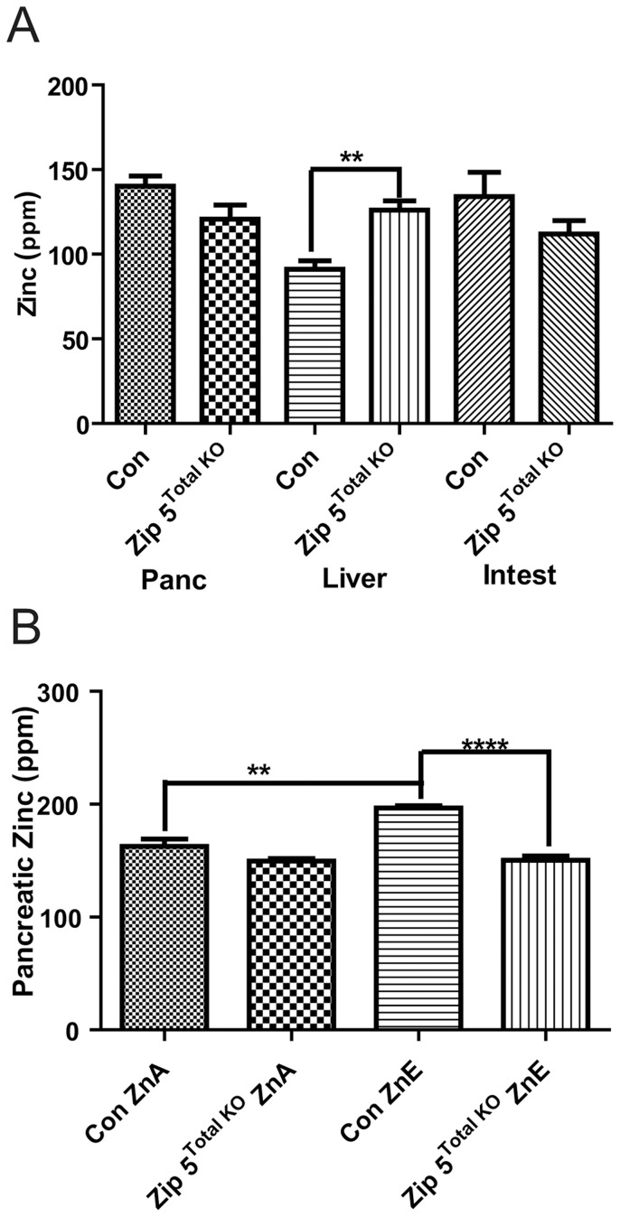 Total knockout of the Zip5 gene results in increased hepatic zinc and modestly attenuates pancreatic zinc accumulation. Mice with homozygous floxed Zip5 genes were crossed with mice that ubiquitously express CRE recombinase under control of the EIIa promoter. Offspring with complete recombination of the Zip5 gene in tail DNA were identified and crossed to create a colony of Zip5 - knockout mice ( Zip5 Total KO ). Zip5 Fx/Fx mice served as controls (Con). (A) Mice (n = 4 or 5) were maintained on normal diet (ZnA) diet and pancreas (Panc), liver and intestine (Intest) were harvested two weeks after weaning and from age matched Zip5 Total KO and control and tissue elements were quantified using ICP-MS and are expressed as ppm/dry weight. Zinc in the liver was the only element which differed significantly between the Zip5 Total KO and control mice (P = 0.0032). (B) Intestine, pancreas and liver were harvested from control and Zip5 Total KO mice fed normal chow (ZnA) or normal chow plus 250 ppm zinc in the drinking water (ZnE) for 8 days and tissue elements were quantified using ICP-MS. Only pancreatic zinc is shown since no other significant changes in any other element were found (**; P