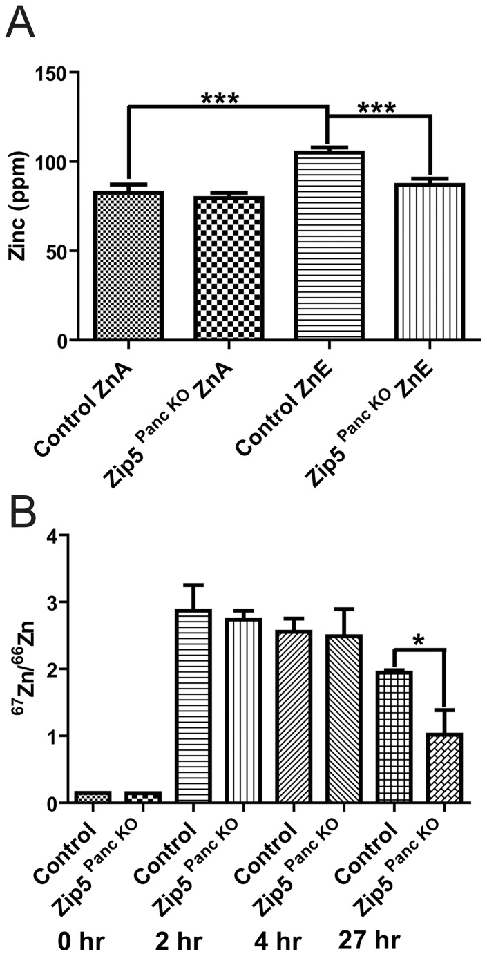 Knockdown of the pancreas acinar cell Zip5 gene has no effect on the rapid accumulation of zinc but apparently impairs zinc retention in the pancreas. (A) Control littermates and pancreas-specific Zip5 -knockout ( Zip5 Panc KO ) mice (n = 4– 5) were killed 8 days after the last tamoxifen injection. Intestine, pancreas and liver were harvested from mice fed normal chow (ZnA) or normal chow plus 250 ppm zinc in the drinking water (ZnE) during those 8 days and pancreatic zinc was quantified using ICP-MS and is expressed as ppm/dry weight of tissue. (B) Control and Zip5 Panc KO mice were injected I.P. with 6.25 mg 67 Zn/kg body weight and the pancreas was harvested at 0 h, 2 h and 4 hr after the injection or (C) 27 hr after the injection. The ratio of 67 Zn/ 66 Zn was measured by ICP-MS. The natural ratio of these stable isotopes is 0.146. Only pancreatic zinc is shown since no other significant changes in any other element were found (*; P
