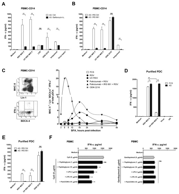 CD14 + monocytes inhibit IFN-α production triggered by Ab-RSV via TLR7 in pDC. ( A ) IFN-α production in CD14 + cell depleted PBMCs induced by Ab-RSV complexes, TLR9 ligand ODN 2216 and TLR7 ligand imiquimod is decreased by blocking <t>endosomal</t> acidification with 50nM Bafilomycin A 1 . ( B ) Ab-RSV-induced IFN-α production in CD14 + cell depleted PBMCs was abrogated in the presence of immune regulatory sequence (IRS) 661 (1.4 µM) a specific blocking agent for endosomal TLR7 and not by a scrambled control nucleotide. ( C ) pDC are the source of Ab-RSV induced, TLR7 mediated production of IFN-α, as shown by intracellular staining for IFN-α in Lineage (CD3 neg. , CD14 neg. , CD19 neg. , CD16 neg. , CD56 neg. , Lin-1), MHC-II high , BDCA-4 + cells. The inhibitor brefeldin A was added at different time points post infection (the time points when BFA was added are given on the X-axis). Cytokines were allowed to accumulate for 10 hrs. after addition of BFA. ( D ) Purified pDC (obtained by negative selection removing CD3 + , CD19 + and CD16 + cells from fresh PBMC, followed by FACS purification of the BDCA-4 + cell population, which resulted in > 95% pure pDC) produce IFN-α upon infection with RSV. This response is abrogated after UV inactivation of RSV. In AS, both live RSV and UV-inactivated RSV induced IFN-α production to a similar extent. One representative experiment out of two performed with pDC isolated from two different donors is shown. ( E ) IFN-α production by Ab-RSV in purified pDC is blocked by IRS661 (1.4µM). ( F ) TLR1,-2 (PAM3CSK4, Peptidoglycan) and TLR4 (LPS) ligands suppress TLR9-triggered (ODN 2216) IFN-α production, but do not affect TLR7 (Gardiquimod) induced IFN-α production. All data represent mean ± SEM of triplicate measurements within 1 donor and analyzed using one way ANOVA followed by a Bonferroni post-test. ns not significant, *P