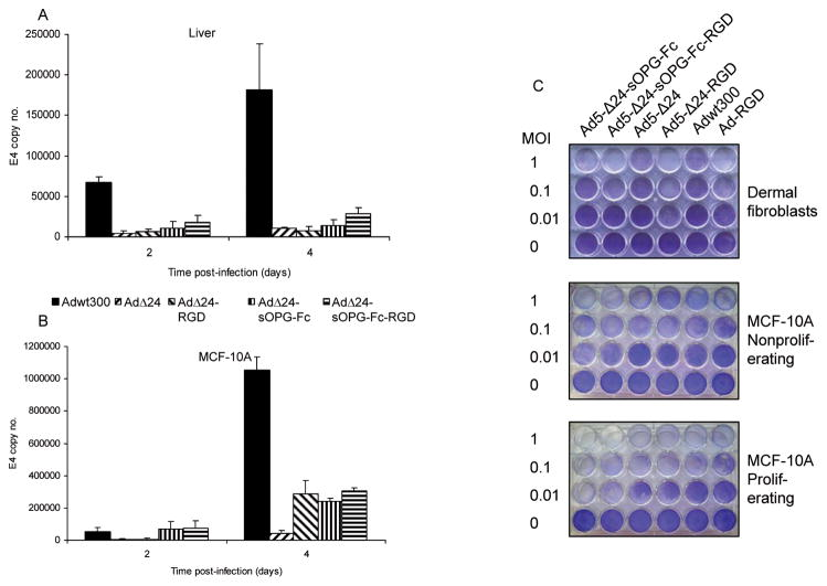 Selectivity of the armed CRAds. Viral replication. Human liver slices ( A ) and MCF-10A normal breast epithelial cells ( B ) were infected with the indicated viruses. The conditioned culture medium was harvested at 2 and 4 days postinfection. DNA was extracted and subjected to Q-PCR to detect the E4 gene as a measure of viral DNA replication. Results are the means ± SD of duplicate determinations. Representative results of 3 separate experiments are shown. C , a panel of non-neoplastic cells was infected at the indicated MOIs. Eight days postinfection, viable cells were fixed and stained with crystal violet. Representative results of 3 separate experiments are shown.