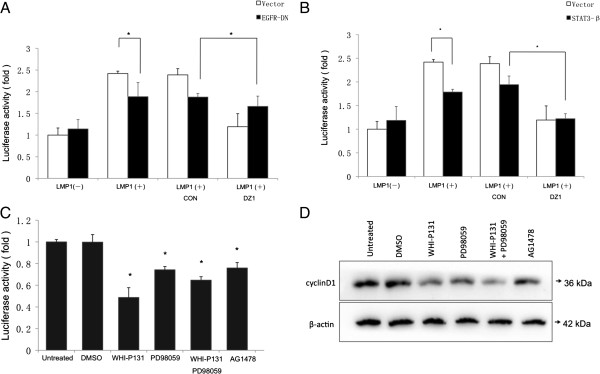Inhibitors and dominant negative mutants targeting the EGFR and STAT3 pathways attenuated LMP1-augmented cyclin D1 promoter activity. (A-B) Stable expression of EGFR-DN and STAT3β inhibited the LMP1-increased activity of cyclin D1. The indicated NPC cell lines were transfected with a cyclin D1 promoter-reporter construct, a Renilla luciferase transfection control plasmid, and an EGFR-DN or STAT3-β expression plasmid. Twenty-four hrs. after transfection, the cells were treated with DNAzymes or a control oligo (2 μM) for 12 hrs. Cells were harvested at 36 hrs. after transfection and subjected to the luciferase assay. Firefly luciferase was measured and normalized to Renilla luciferase activity. The results were expressed as fold induction of the reporter activity in vector-transfected CNE1 cells, which was assigned a value of 1. (mean ± SD, n =3, * p