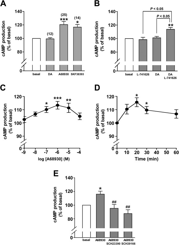 Dopamine D 1 receptor agonist-induced cAMP activity in human airway smooth muscle cells. (A) The effects of dopamine (DA; 1 μM) or the dopamine D 1 -like receptor agonists (A68930 or SKF38393; 1 μM respectively) on cAMP production in cultured HASM cells. Number of experiments was shown in parentheses. (B) The effects of dopamine (1 μM) on cAMP production in the presence or absence of the dopamine D 2 receptor antagonist (L-741626; 1 μM for 30 min pretreatment before dopamine treatment). N = 4. (C) Concentration-dependent effect of dopamine D 1 -like receptor agonist A68930 (1 nM - 100 μM) on cAMP production in cultured HASM cells. The cells were incubated with A68930 for 20 min before cAMP assay. N = 4 - 13. (D) Time-course effect of A68930 (1 μM) on cAMP production in cultured human airway smooth muscle cells. N = 6. (E) The effect of dopamine D 1 -like receptor selective antagonists SCH23390 or SCH39166 on A68930-stimulated cAMP production in HASM cells. Cells were pretreated with SCH23390 (1 μM) or SCH39166 (1 μM) for 30 min pretreatment prior to A68930 (1 μM) treatment for 20 min. Data represent means ± SEM. N = 7 - 9. * P