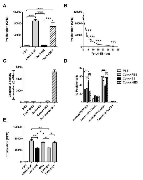 Suppression of mitogen-induced and antigen - specific lymphocyte proliferation by  Tci - L4 - ES. To determine the effects of  Tci -L4-ES on mitogen-induced proliferation, PBMC from helminth-naïve lambs were cultured with Con A in the presence or absence of  Tci -L4-ES (ES) or heat-inactivated  Tci -L4-ES (HiES). To determine the effects of  Tci -L4-ES on antigen-specific proliferation, PBMC from ovalbumin (OVA)-immunized lambs were cultured with OVA in the presence or absence of ES or HiES. Proliferation assessed by incorporation of [3H] thymidine and expressed as counts per minute (cpm).  (A)  Proliferation of helminth-naïve PBMC at 72 h following culture with PBS alone (PBS), 5 μg/mL Con A (ConA + PBS), 5 μg/mL Con A + 30 μg/mL ES (ConA + ES) or 5 μg/mL Con A + 30 μg/mL HiES (ConA + HiES).  (B) PBMC proliferation at 72 h following culture with 5 μg/mL Con A + 0, 3.75, 7.5, 15 and 30 μg/mL ES.  (C - D) Caspase activity in PBMC cell lysates and Annexin V/7AAD staining in PBMC following 72 h culture with PBS, Con A, Con A + ES or Con A + HiES.  (E) Proliferation of PBMC from ovalbumin-immunized lambs at 120 h following culture with PBS alone (PBS), 5 μg/mL Con A (ConA + PBS), 5 μg/mL Con A + 30 μg/mL ES (ConA + ES), 10 μg/mL OVA (OVA), 10 μg/mL OVA + 30 μg/mL ES (OVA + ES) or 10 μg/mL OVA + 30 μg/mL HiES (OVA + HiES). Data represents mean ± SEM from three replicate cultures from three helminth-free lambs. * P
