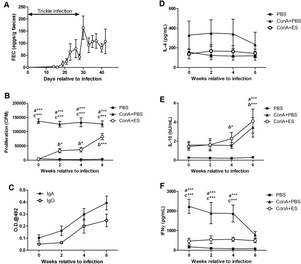 The effects of  T.  circumcincta  infection on  Tci - L4 - ES mediated lymphocyte suppression. Seven helminth-naïve lambs were trickle infected with 2000  T .  circumcincta L3 three times a week for four weeks. PBMC were harvested at 0, 2, 4 and 6 weeks from the start of infection and cultured for 72 h with PBS alone (PBS), 5 μg/mL Con A (Con A + PBS) or 5 μg/mL Con A + 15 μg/mL  Tci -L4-ES (Con A + ES). Proliferation was assessed at 72 h by measurement of [ 3 H] thymidine incorporation. Levels of cytokine present in the cell culture supernatants at 54 h were determined by ELISA.  (A) Faecal egg count (FEC) data over the course of the experimental infection.  (B) Proliferation of PBMC in response to PBS, Con A + PBS and Con A + ES during experimental  T .  circumcincta  infection.  (C) Levels of serum  Tci -L4-ES-specific IgA and IgG during experimental  T .  circumcincta infection.  (D - F)  Concentrations of IL-4, IL-10 and IFN-γ in PBMC cultures supernatants. Data represents mean ± SEM.  a significant difference between Con A + PBS vs. PBS-stimulated cultures;  b significant difference between ConA + ES vs. PBS-stimulated cultures;  c significant difference between Con A + PBS vs. Con A + ES stimulated cultures; * P