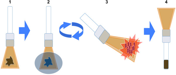 Dry pulverization method overview. Tissue is placed in <t>Covaris</t> tissueTUBES with adapters and attached glass vials (step 1). To keep samples both cold and brittle to facilitate pulverization, tissues are briefly submerged in liquid nitrogen (step 2) between successive rounds of pulverization (step 3). Following the pulverization of samples to a powder, the tissueTUBEs are inverted and tissue powder is collected into attached Covaris glass vials (step 4). Tissue powder is fixed, washed and stored as a pellet at −80°C.