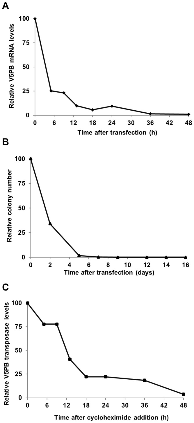 piggyBac transposase bioavailability. ( A ) Half-life of the PB <t>mRNA</t> . Cells were transfected with 187.5 ng of PB mRNA. Total <t>RNA</t> was extracted at indicated times, reverse transcribed and subjected to qPCR. 18S RNA served as an internal standard to normalize the data. ( B ) Persistence of PB pDNA after transfection . Cells were transfected with 187.5 ng of PB pDNA and plasmid rescue was performed at 0 to 20 days. Ampicillin-resistant colonies were selected to evaluate the persistence of the plasmid. ( C ) Half-life of the PB transposase (V5PB Tp) . Cells were transfected with 187.5 ng of PB mRNA, incubated 18 h to reach the peak of transposase expression and treated with cycloheximide (t0=100). Total protein extraction was done at the indicated times from t0. The transposase half-life was determined by Western-Blot and quantification was normalized to the endogenous actin protein.