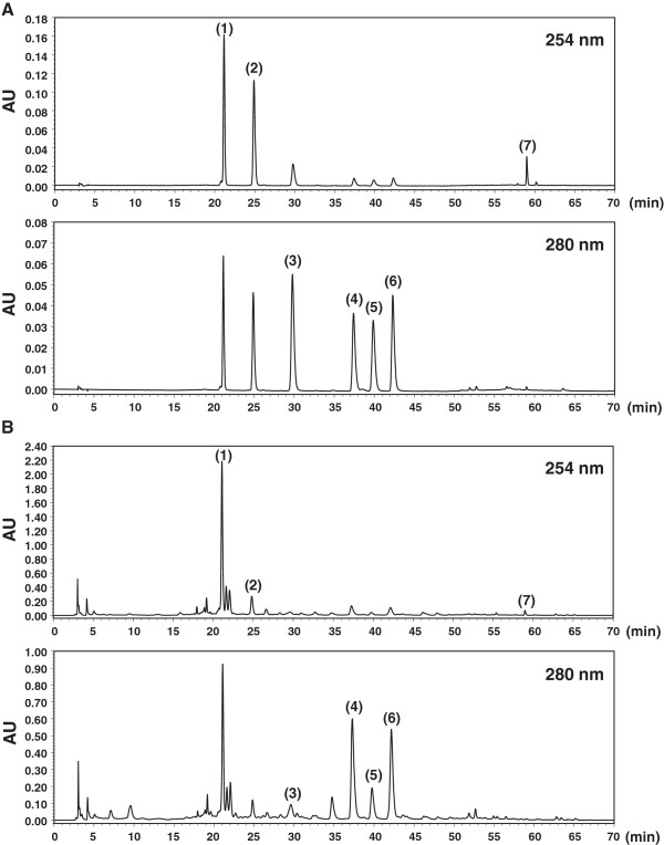 <t>RP-HPLC-DAD</t> chromatograms of 7 major compounds. puerarin (1), daidzin (2), liquiritin (3), naringin (4), hesperidin (5), neohesperidin (6), and glycyrrhizin (7) in the standard mixture (A) and SSE sample (B) identified at wavelengths of 254 and 280 nm.