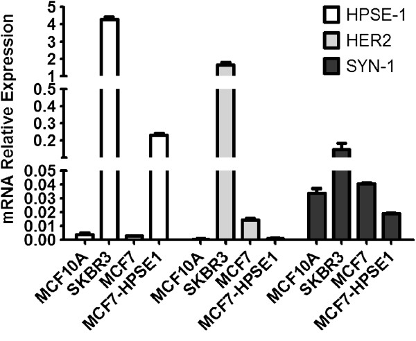 HPSE1, HER2 and Syndecan-1 mRNA expression in MCF10A, SKBR3, MCF7 and MCF7-HPSE1. The <t>RNA</t> was extracted using <t>TRIzol</t> reagent, converted into cDNA by RT-PCR and submitted to qRT-PCR using specific primers for HER2, Syn-1 and HPSE1, as described in methods. The values were corrected by RPL13a (ribosomal protein) and GAPDH expressions. Each bar indicates the mean ± SD of triplicate assays. *P