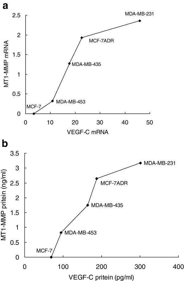 The correlation between MT1-MMP and VEGF-C expression in human breast cancer cells. (a) MT1-MMP and VEGF-C mRNA expression. (b) MT1-MMP and VEGF-C protein expression.