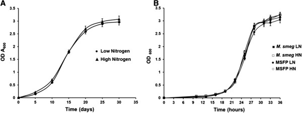 Growth of the mycobacterial strains in low and high nitrogen broth culture. A . OD 600 of wild type M. bovis was inoculated to an initial optical density of 0.006 - 0.008 in 7H9 medium containing (●) low nitrogen (3.8 mM ammonium sulphate) and (▲) high nitrogen (60 mM ammonium sulphate). B . OD 600 of wild type M. smegmatis and MSFP in low and high nitrogen broth culture. Wild type M. smegmatis, low nitrogen (■), high nitrogen (□); MSFP, low nitrogen (●), high nitrogen (○). Data is mean ± SD of values obtained from three independent cultures. LN, low nitrogen; HN, high nitrogen.