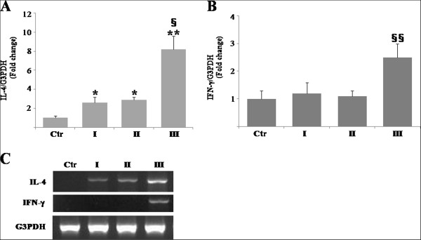 Tissue expression of interleukin-4 (IL-4) and interferon-γ <t>(IFN-γ)</t> mRNA in the tongue of the mercury-treated rats by real-time reverse transcription-polymerase chain reaction (qRT-PCR). A and B : qRT-PCR analyses examine expression levels of mRNA encoding IL-4 (A) and IFN-γ (B) normalized by those of glyceraldehyde-3-phosphate dehydrogenase (G3PDH). Data represents mean ± standard error (SE) of pooled data derived from three to five independent experiments. *, significantly different at p