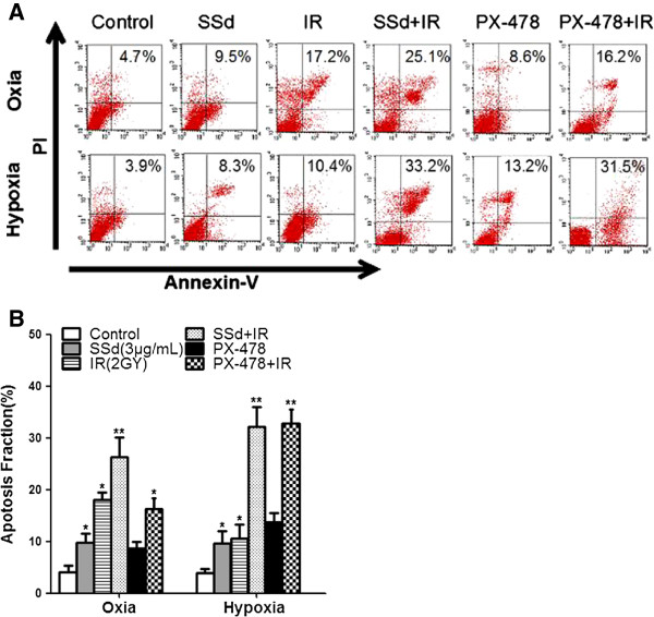 Effects of saikosaponin-d and radiation on apoptosis in hepatocellular carcinoma cell SMMC-7721. A . Flow cytometry shows apoptotic changes before and after treatment under oxia and hypoxia; B . Apoptotic fraction of cells under oxia and hypoxia; SSd: saikosaponin-d; IR: radiation. *p