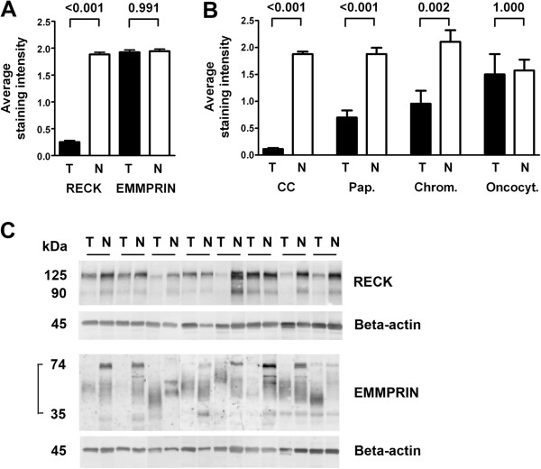 RECK expression is tumor-specific. The average staining intensity for RECK decreased to 13% in tumor tissue compared to normal tissue, whereas EMMPRIN staining remained unchanged (A) . Mean RECK staining intensities for the tumor subtypes ± standard error of the mean are shown in (B) . In comparison to their normal counterparts, RECK values increased gradually from 6% in clear cell carcinomas (CC) over 38% in papillary carcinomas (Pap.) and 45% in chromophobe carcinomas (Chrom.) to 96% in oncocytomas (Oncocyt.). P values are given above the pairs of columns (A , B) . RECK and EMMPRIN antibodies were checked in Western blots (C) . RECK bands at 125 kDa and 90 kDa were detected in protein lysates of 8 pairs of tumor and adjacent normal renal tissue (control: <t>beta-actin).</t> These samples were also used to show the panel of EMMPRIN bands, in our blot migrating between 35 and 74 kDa (control: beta-actin).
