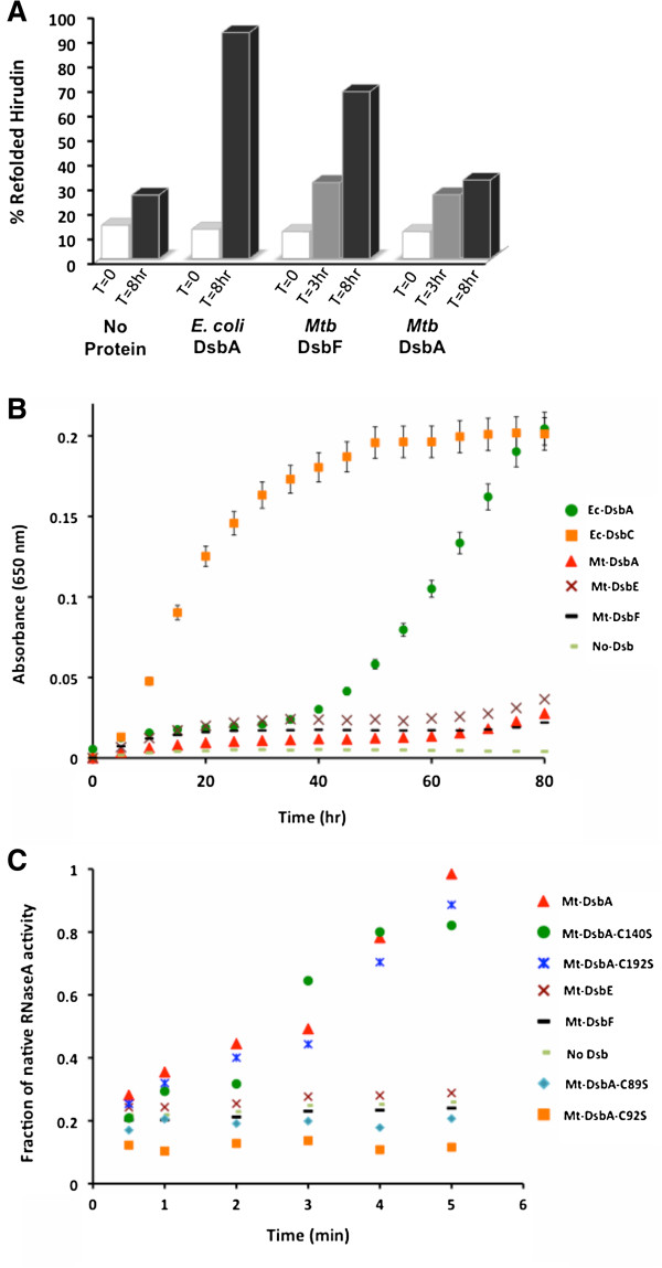 Biochemical characterization of Mt-DsbA. A. Mt-DsbA does not facilitate correct disulfide bond formation and folding of denatured hirudin, whereas Mt-DsbF and Ec-DsbA do. B. Mt-DsbA does not possess insulin reductase activity as observed for Mt-DsbE and Mt-DsbF. In contrast, Ec-DsbC possesses disulfide reductase activity, and Ec-DsbA has reduced reductase activity in comparison to Ec-DsbC. C. In vitro Dsb protein isomerase activity was assessed by using the scrambled RNaseA (scRNaseA) refolding assay. Mt-DsbA has disulfide bond isomerase activity in contrast to Mt-DsbE and Mt-DsbF, which do not possess the ability to refold scRNaseA. The fraction of native RNaseA activity were calculated and plotted against incubation time.