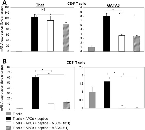 hMSCs inhibit expression of T-bet and GATA-3 in murine CD4 + and CD8 + T cells. Total RNA was extracted from murine T cells 48 hrs after stimulation with specific peptides and co-culturing with human bone marrow-derived mesenchymal stem cells (hMSCs). The RNA was reverse transcribed into cDNA and specifically amplified using probes for murine T-bet and GATA-3. Bars in each panel represent fold change of mRNA expression as compared with un-stimulated T cells. Results for CD4 + T cells are shown in panel A and for CD8 + T cells in panel B . Every assay was done in triplicate, values are expressed as the mean and SD of triplicates. Statistical analysis was carried out by applying the Student's t- test. *indicates P