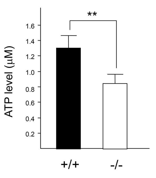 Intracellular ATP levels in wild-type and CatE −/− macrophages. Macrophages (1 × 10 5 cells) were cultured on 96-well plates at 37°C for 24 h. After replacement with fresh media, the culture plate was incubated at room temperature (25°C) for 30 min. ATP levels were determined by the manufacturer's protocol of the CellTiter-Glo assay kit according to the manufacturer's protocol. The concentration of intracellular ATP was determined by the titration of the control medium without cells plus 0.1−1.0 µM ATP.