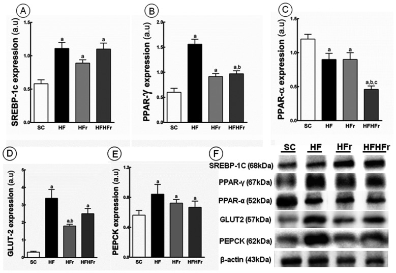 ( A ) Sterol regulatory element-binding proteins(SREBP)-1c; ( B ) peroxisome <t>proliferator-activated</t> receptors <t>(PPAR)-γ;</t> ( C ) PPAR-α; ( D ) glucose transporter (GLUT)-2; and ( E ) phosphoenolpyruvate carboxykinase (PEPCK) protein expression in hepatic tissue normalized to the signal for β-actin (expressed in arbitrary units, a.u.); ( F ) representative bands of the proteins. Values are means ± standard error. There was a significant difference ( p ≤ 0.05) compared with the a SC group; b HF group; and c HFr group.