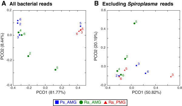 Principal Coordinate Analyses (PCoA) of the microbiota. The samples are color-coded by type: blue squares, P . schultei anterior midgut (Ps_AMG) samples; green circles, R . artemis anterior midgut (Ra_AMG) samples; red triangles, R . artemis posterior midgut (Ra_PMG) samples. The label indicates the individual id within each species. The numbers in parentheses in axis labels indicate the percentage of variance explained. (A) All 5,679 bacterial 16S rDNA reads. (B) Excluding Spiroplasma reads.