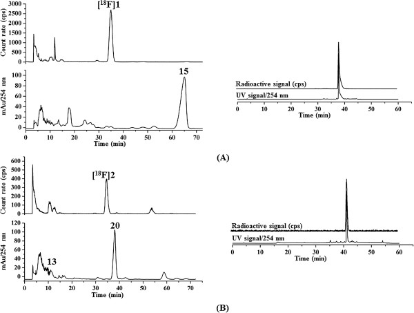 High-performance liquid chromatography. Isocratic semi-preparative RP-HPLC chromatograms (left) and the analytical HPLC chromatograms (right) of the radiotracers spiked with the respective reference compounds. (A) [ 18 F] 1 ( t R = 35.3 min), eluent: 58% MeCN/10 mM NH 4 OAc aq. on a Reprosil Gold C18, 10 μm, 150 × 4.6 mm; flow rate: 2.5 mL/min. (B) [ 18 F] 2 ( t R = 35.6 min), eluent: 60% MeCN/20 mM NH 4 OAc aq. on a Multospher 120 RP-18 AQ, 5 μm, 150 × 10 mm; flow rate: 2.0 mL/min. The precursors for radiolabelling ( 13 and 15 ) and compound 20 (see 'Experimental' section) were also identified by analytical HPLC on a Multospher 120 RP 18 AQ column, 5 μm, 250 × 4.6 mm; solvents: A: 10% MeCN/20 mM NH 4 OAc, B: 90% MeCN/20 mM NH 4 OAc. Gradient elution(A%): 0 to 10 min, 100%; 10 to 40 min, gradient from 100% to 0%; 40 to 45 min, 0%; 45 to 50 min, 100% at a flow rate of 1 mL/min.