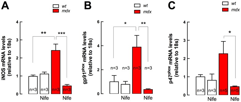 iNOS and NADPH oxidase subunits gene expression in diaphragm muscles. Diaphragms were dissected from nifedipine- and saline-treated mice and mRNA levels were assessed by real time PCR. A. iNOS, B. , gp91 phox and C. p47 phox expression. Data are expressed as mean ± S.E.M. Diaphragms were obtained from n = mice as indicated in the figure. * P