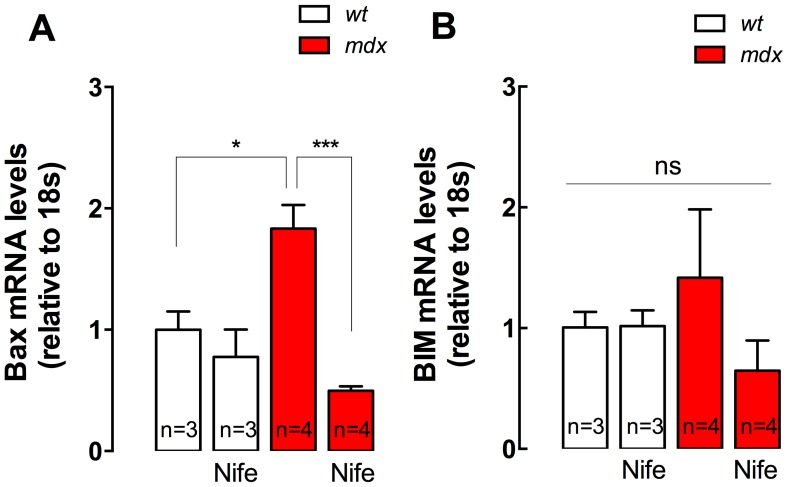 Bax and BIM gene expression in diaphragm muscles. Diaphragms were dissected from nifedipine- and saline-treated mice and mRNA levels were assessed by real time PCR. A. Bax, B. BIM mRNA levels. Data are expressed as mean ± S.E.M. Diaphragms were obtained from n = mice as indicated in the figure, * P