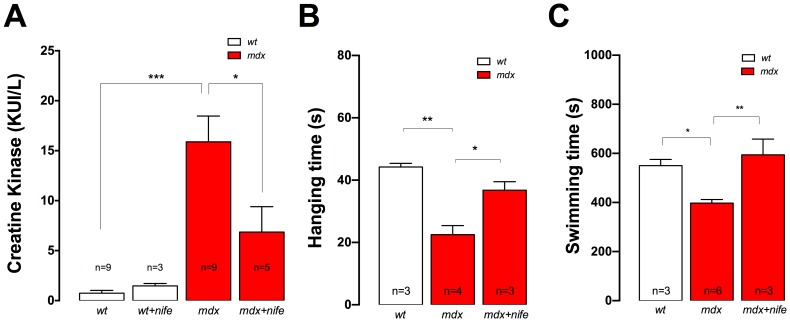 Nifedipine treatment reduced serum CK and increases muscle function in mdx mice. A. Blood samples were collected by cardiac puncture under anesthesia from both nifedipine- or saline-treated mice. CK activities were determined by the UV kinetic method. B. Averaged hanging time obtained in the inverted grid-hanging test in saline- and nifedipine treated mice. C. Averaged swimming time obtained in the forced swimming test in nifedipine- or saline- treated mdx mice. Data are expressed as mean ± S.E.M. n = mice is indicated in the figure, * P