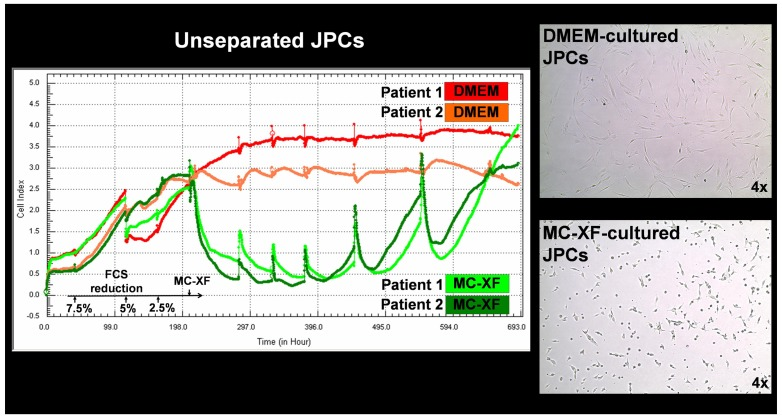 Life-monitoring measurements of cell proliferation by unseparated JPCs using the x-CELLigence system (ACEA Biosciences). JPCs of passage 4 derived from two different donors were seeded into special E-plates in DMEM/F12/10%FCS culture medium. Two days later (44 hours - each tick of the scale corresponds to 11 hours), a gradual FCS reduction was performed in one-half of the test runs (green and dark green), whereas the other half of the wells was further cultivated in DMEM/F12/10%FCS (red and coral). Nine days (297 hours) after the initiation of FCS reduction, MC-XF culture medium was added to the cells. The proliferation curve progression of DMEM-cultured JPCs (from two representative patients) is highlighted in red and coral and that of MC-XF-cultivated cells is highlighted in dark green and green. The right panel of the figure shows the cell morphology of DMEM- and MC-XF-cultured JPCs. Note the reduced cell size under MC-XF culture conditions (on uncoated dishes) leading to the significant decrease of cell impedance immediately after the addition of the MC-XF culture medium.