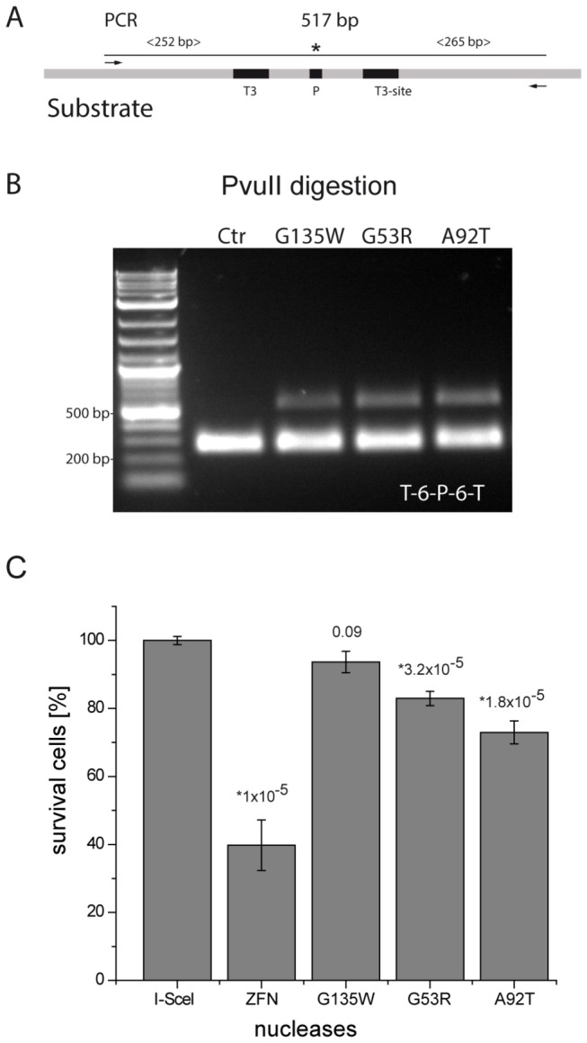 Activity and toxicity of TALE-PvuII fusion proteins in human cells. ( A ) PCR was performed with the plasmid from the HEK293 cells resulting in a DNA fragment of 517 bp. * indicates the cleavage site of PvuII. ( B ) Analysis of the PCR product (14.5 nM) after digestion with 20 U of PvuII for 1 h. A cleavage-resistant band indicates the loss of the PvuII site by NHEJ and confirms the activity of the TALE-PvuII fusion proteins. ( C ) Cell toxicity of the PvuII-based TALENs. After co-transfection of a mCherry expression plasmid, cell survival rate was calculated as the decrease in the number of mCherry-positive cells from day 2 to day 5 by flow cytometry, normalized to cells transfected with an I-SceI expression vector. * Statistically significant differences in toxicities between I-SceI and TALE-PvuII fusion proteins are indicated (P-values) .