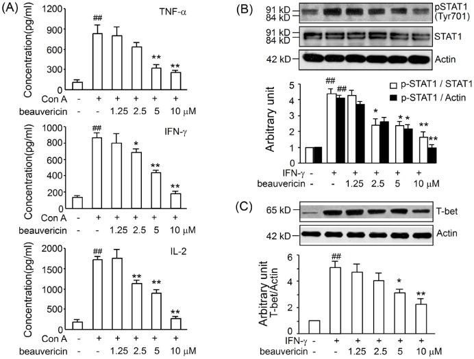 Effects of beauvericin on cytokine production, STAT1 phosphorylation, and T-bet expression in T lymphocytes. CD3 + T cells purified from lymph nodes (5×10 5 ) were incubated with different concentrations of beauvericin in the presence of Con A for 24 h. The levels of TNF-α, IFN-γ and IL-2 (A) in supernatants of T cells were determined by ELISA (B, C) T cells were cultured with 2.5-10 µM beauvericin for 3 h, then treated with 25 ng/mL murine IFN-γ for 30 min (detection of pSTAT1, B) or 6 h (detection of T-bet, C). After the incubation, proteins were extracted and assessed by western blotting. The values are shown as mean ± SEM from three independent experiments. * P