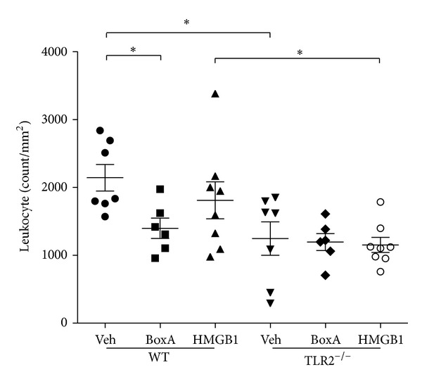 Leukocyte infiltration after myocardial ischemia (30 min) and reperfusion (24 hrs). Box A reduced leukocyte infiltration in WT animals, while it had no effect in TLR2 −/− animals. HMGB1 injection did not affect leukocyte infiltration in both WT and TLR2 −/− . * P