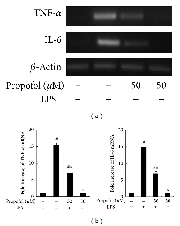 Effect of propofol on LPS-induced TNF- α and IL-6 expression. (a) RAW264.7 macrophages were pretreated with dimethyl sulfoxide (DMSO) or 50 μ M propofol for 40 min and then stimulated with LPS for 2 h. Steady state mRNA levels of TNF- α and IL-6 were examined by RT-PCR. (b) The levels of TNF- α and IL-6 mRNA were quantified by measuring band intensities and shown as fold increase relative to β -actin mRNA levels. Each value represents the means ± SD for n = 4. # and ∗ indicate statistically significant differences ( P