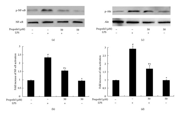 Effect of propofol pretreatment on LPS-induced phosphorylation of nuclear NF- κ B and Akt. (a), (c) The cells were pretreated with dimethyl sulfoxide (DMSO) or propofol for 40 min and then stimulated with LPS for 1 h. Nuclear NF- κ B and Akt activation, indicated by phosphorylation, was analyzed by Western blotting on whole cell lysates. (b), (d) The levels of phosphorylated NF- κ B (p-NF- κ B) and phosphorylated Akt (p-Akt) were quantified by measuring band intensities and represented as fold change over total NF- κ B and Akt. Each value represents the means ± SD for n = 4. # and ∗ indicate statistically significant differences ( P