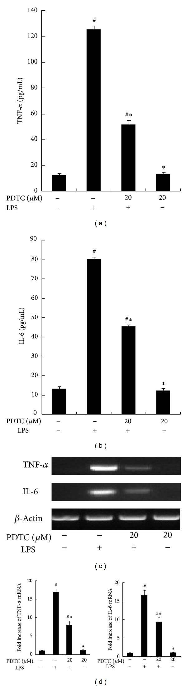 Effect of NF- κ B Inhibitor on LPS-induced TNF- α and IL-6 expression. RAW264.7 macrophages were pretreated with dimethyl sulfoxide (DMSO) or 20 μ M pyrrolidine dithiocarbamate (PDTC) for 1 h and stimulated with 100 ng/mL LPS for 8 h. The concentrations of TNF- α and IL-6 in culture supernatants were measured by ELISA. (c) RAW264.7 macrophages were pretreated with dimethyl sulfoxide (DMSO) or 20 μ M PDTC for 1 h and then stimulated with LPS for 2 h. Steady state mRNA levels of TNF- α and IL-6 were examined by RT-PCR. (d) The levels of TNF- α and IL-6 mRNA were quantified by measuring band intensities and shown as fold increase relative to β -actin mRNA levels. Each value represents the means ± SD for n = 4. # and ∗ indicate statistically significant differences ( P