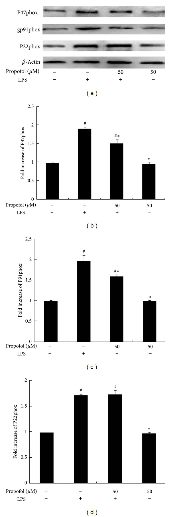 Effect of propofol pretreatment on LPS-induced NADPH oxidase expression. Cells were pretreated with dimethyl sulfoxide (DMSO) or propofol for 40 min and then stimulated with LPS for 8 h. (a) Protein expression of oxidase subunits was analyzed by Western blot analysis of whole cell lysates. (b, c, and d) The levels of subunit protein expression were quantified by measuring band intensities and displayed as fold increase relative to β -actin. Each value represents the means ± SD for n = 4. # and ∗ indicate that a value significantly ( P