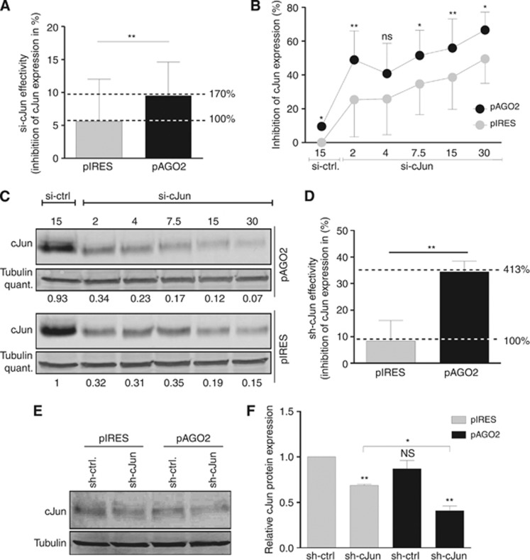 si-cJun and sh-cJun activity in melanoma after AGO2 re-expression. ( A ) <t>cJun-qRT–PCR</t> analysis of Mel-Ju cells after 2 μ g pAGO2 or 2 μ g pIRES (mock) transfection and si-cJun treatment (cJun inhibition per pmol si-cJun). cJun inhibition increases after AGO2 re-expression up to 70% compared with mock. ( B ) cJun qRT–PCR (* P