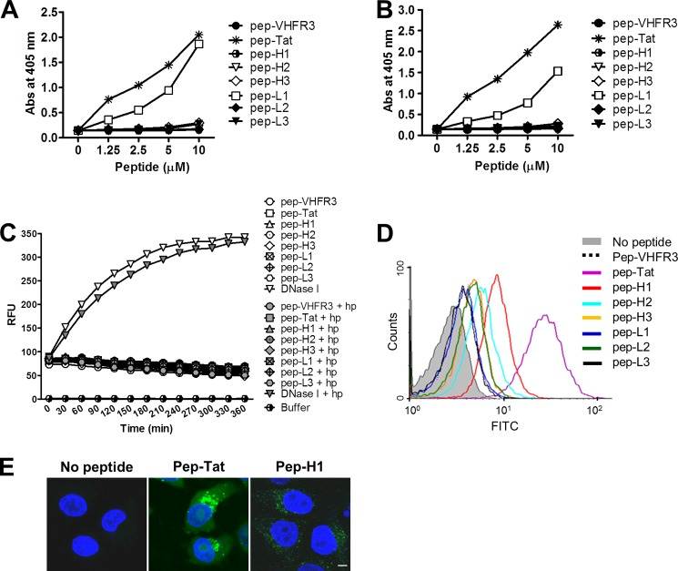 """Biochemical properties of 3D8 CDR-derived peptides. A and B , ELISA for DNA and heparin binding activity. Wells coated with 10 μg/ml plasmid DNA ( A ) or 1 μg/ml heparin ( B ) were incubated with biotin-labeled peptides. The bound peptides were detected using alkaline phosphatase-conjugated streptavidin. Data represent the mean ± S.D. of triplicate wells and are representative of two independent experiments. C , FRET-based DNA cleavage assay. scFvs (1 μ m ) or a mixture of scFv (1 μ m ) and heparin (10 μg/ml) were incubated with a double-labeled single-stranded DNA substrate (500 n m ) as described under """"Experimental Procedures."""" The fluorescence intensity was then measured in real time over 6 h (at 5-min intervals). RFU , relative fluorescence units. Data are representative of three independent experiments. D and E , cell-penetrating activity of the peptides. HeLa cells were incubated with FITC-labeled peptides (5 μ m ) for 6 h at 37 °C and then analyzed by flow cytometry ( D ) and confocal microscopy ( E ). Nuclei were stained with Hoechst 33342 ( blue ). Scale bar = 10 μm. Data are representative of three independent experiments."""