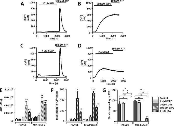Glycolytic inhibitors but not mitochondrial inhibitors induce an irreversible cytosolic Ca 2+ overload in pancreatic cancer cells. Using fura-2 fluorescence imaging, [Ca 2+ ] i concentration was measured in PANC1 or MIA PaCa cells. A–D , representative traces show the effect of various metabolic inhibitors on [Ca 2+ ] i in PANC1 cells. Cells were treated for 30 min with either mitochondrial inhibitors (10 μ m OM ( A ); 4 μ m CCCP ( C )) or glycolytic inhibitors (500 μ m BrPy ( B ); 2 m m IAA ( D )) followed by stimulation with the purinergic agonist, ATP (100 μ m ) to test for cell viability. Similar qualitative results were obtained for MIA PaCa-2 cells. Responses were quantified by measuring the AUC ( E ) for the 30-min treatment with drug and maximum change in [Ca 2+ ] i ( F ). Recovery from metabolic inhibitor treatment was assessed by measuring the % cells that subsequently responded to ATP ( G ). *, p