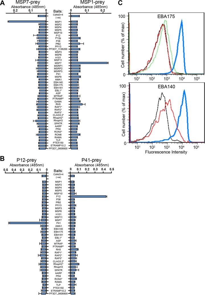 Recombinant P. falciparum merozoite proteins recapitulate known biochemical activities. The interactions between recombinant MSP1-MSP7 ( A ), and P12-P41 ( B ) were detected in both bait-prey orientations by screening the P. falciparum merozoite library with the indicated prey proteins using the AVEXIS assay. Baits labeled with an asterisk were below threshold levels required for the assay. Bar charts show mean ± S.D.; n = 3. C , Recombinant <t>biotinylated</t> EBA175 (top panel) and EBA140 (bottom panel) immobilized on fluorescent streptavidin-coated beads bound to untreated erythrocytes (blue line). Binding was blocked by pre-treating the erythrocytes with neuraminidase (red line) or, for EBA175, pre-incubating erythrocytes with an anti-GYPA monoclonal antibody (dotted green line). Negative controls were Cd4d3 + 4-coated beads (black line).
