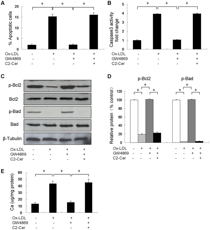 Effect of GW4869 on Ox-LDL-induced apoptosis in cultured VSMCs (n = 3). Cells were incubated in control medium (in DMSO), 50 µg/ml Ox-LDL alone (in DMSO), 50 µg/ml Ox-LDL in the presence of 20 µM GW4869 (in DMSO) or 50 µg/ml Ox-LDL in the presence of 20 µM GW4869 and 5 µM C2-ceramide (in DMSO) for 24 hours. ( A ) The percentage of apoptotic cells was then assessed. ( B ) Caspase-3 activity was measured and results are shown as percentage of control. ( C ) p-Bcl2 and p-Bad protein levels were detected by immunoblot analysis. ( D ) p-Bcl2 and p-Bad protein levels were quantified and normalized to total Bcl2 and Bad levels. ( E ) Cells were treated with/without 20 µM GW4869 and 5 µM C2-ceramide in the presence of Ox-LDL for 7 days. The calcium content was quantified using ocresolphthalein complexone method. *p